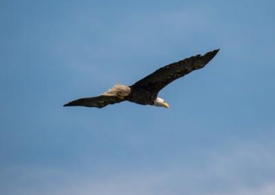 eaglet_04